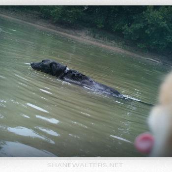 2012 Shane Walters Castlewood Park St. Louis 9508