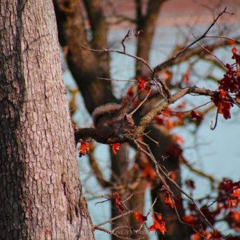 Shane Walters Images - Squirrel (0912)
