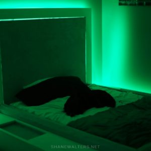 Bed In Floor Contemporary Bedroom Project Photos 9807 Green LED Lighting