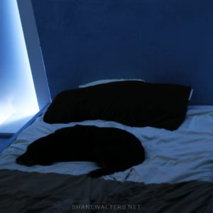 Bed In Floor Contemporary Bedroom Project Photos 9848