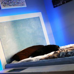 Bed In Floor Contemporary Bedroom Project Photos 9974